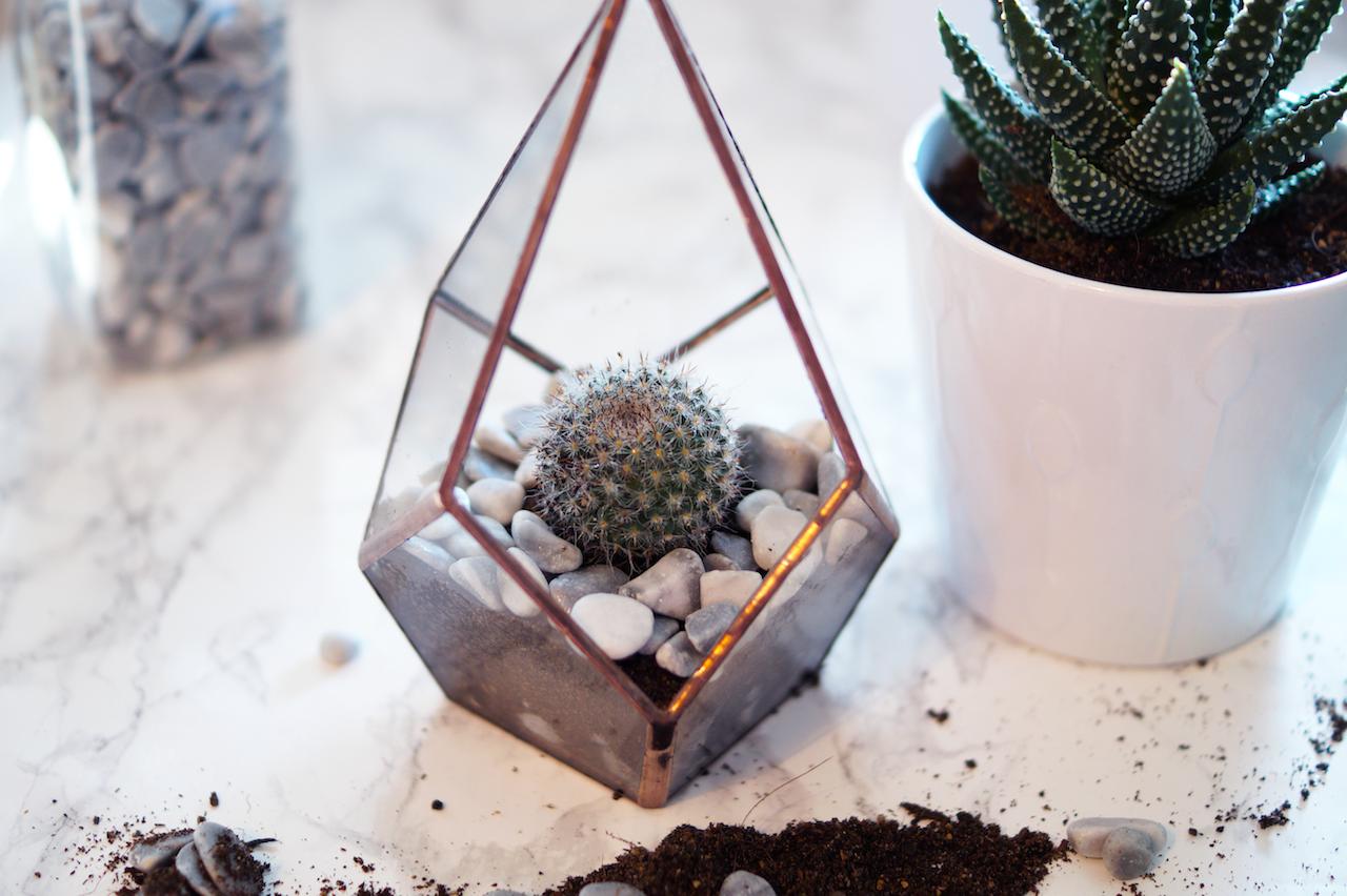 A Cute Diy Cactus Glass Terrarium A Snippet Of Life